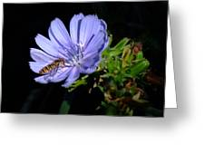 Buzzy in Blue Greeting Card by Alison Richardson-Douglas