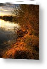 By The Evening's Golden Glow Greeting Card by Saija  Lehtonen