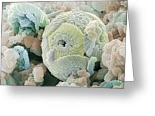 Calcareous Phytoplankton Fossil, Sem Greeting Card by Power And Syred