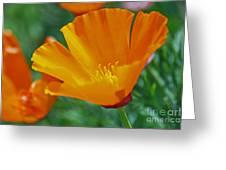 California Poppy Greeting Card by Morgan Wright
