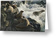 California Sea Lions Bask On San Miguel Greeting Card by James A. Sugar
