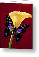 Calla Lily And Purple Black Butterfly Greeting Card by Garry Gay
