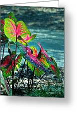 Calladiums Greeting Card by Judi Bagwell
