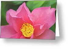 Camelia Greeting Card by Vicki Jauron