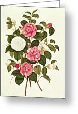 Camellia Greeting Card by English School