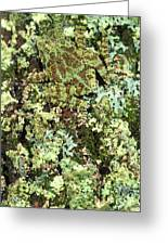 Camouflaged Vietnamese Mossy Tree Frog Greeting Card by John Pitcher