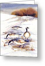 Canada Geese In Stubble Field Greeting Card by Peggy Wilson