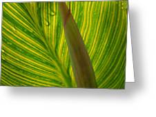 Canna Leaf Greeting Card by Peg Toliver