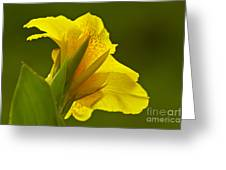 Canna Lily Greeting Card by Heiko Koehrer-Wagner