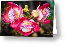 Cannonball Tree In Bloom  Greeting Card by Melle Varoy