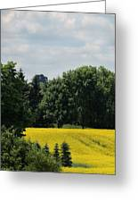 Canola Field Greeting Card by Merv Scoble