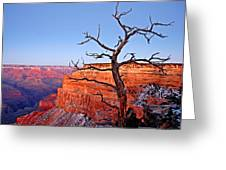 Canyon Tree Greeting Card by Peter Tellone