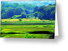 Cape Cod Marsh On A Hot Day Greeting Card by Annie Zeno