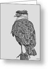 Caracara Greeting Card by Larry Linton