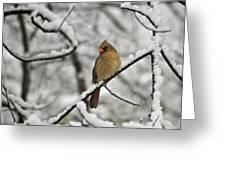 Cardinal Female 3652 Greeting Card by Michael Peychich