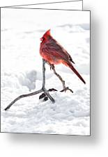 Cardinal In Snow Greeting Card by Tamyra Ayles