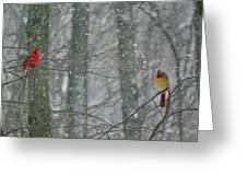 Cardinals In Snow Greeting Card by Serina Wells