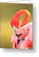 Caribbean Flamingo Phoenicopterus Rube Greeting Card by Stuart Westmorland