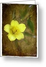 Carolina Jessamine Greeting Card by Judi Bagwell