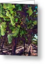 Cascading Grapes Greeting Card by Elaine Plesser
