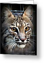 Cat Fever Greeting Card by Kathy  White