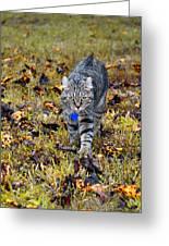 Cat In Autumn Greeting Card by Susan Leggett