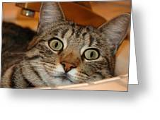 Cat In Sink Greeting Card by Beau Brady