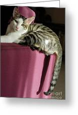 Cat On Sofa Greeting Card by Sami Sarkis