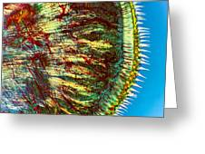 Cat Tongue Tissue, Light Micrograph Greeting Card by Dr Keith Wheeler