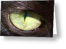 Cat's Eye Greeting Card by Shannon Blanchard