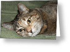 Cats Eyes Greeting Card by Michael Waters