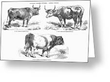 Cattle Breeds, 1856 Greeting Card by Granger