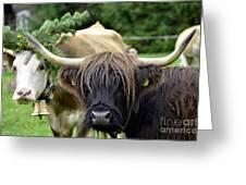 Cattle Drive In Alps Greeting Card by Elzbieta Fazel