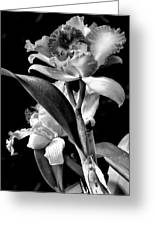 Cattleya - Bw Greeting Card by Christopher Holmes