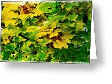 Changing Leaves Greeting Card by Russ Harris