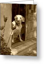 Charleston Shop Dog In Sepia Greeting Card by Suzanne Gaff