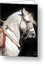 Charro Stallion Greeting Card by Jim and Emily Bush