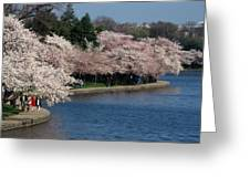 Cherry Blossom Festival, Jefferson Greeting Card by Richard Nowitz