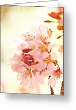 Cherry Blossom Greeting Card by Kim Fearheiley