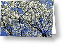 Cherry Blossoms II Greeting Card by Glennis Siverson