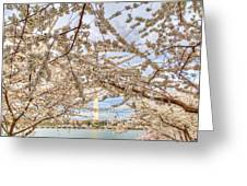 Cherry Blossoms Washington Dc 3 Greeting Card by Metro DC Photography