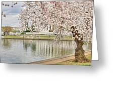Cherry Blossoms Washington Dc 6 Greeting Card by Metro DC Photography