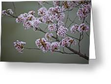 Cherry Tree Blossoms Hang Greeting Card by Hannele Lahti