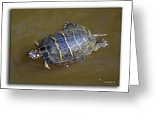 Chester River Turtle Greeting Card by Brian Wallace