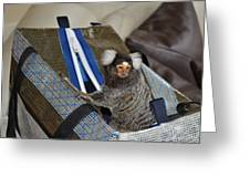 Chewy The Marmoset Going Fishing Greeting Card by Barry R Jones Jr