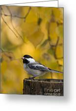 Chickadee On A Log Greeting Card by Tim Grams