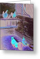 Chicken Coop Greeting Card by Ferrel Cordle