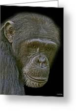 Chimpanzee Portrait Greeting Card by Larry Linton