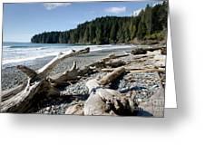 China Driftwood China Beach Juan De Fuca Provincial Park Bc Greeting Card by Andy Smy