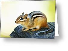 Chipmunk Greeting Card by Elena Elisseeva